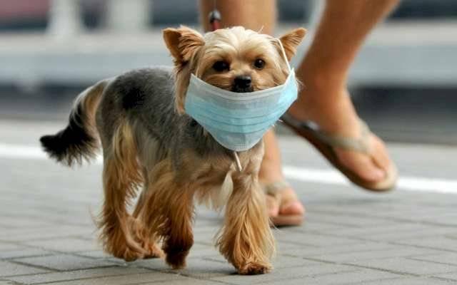 coronavirus canino prevencion