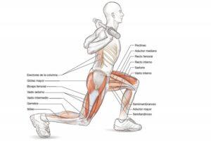 musculos-implicados-en-zancadas-laterales